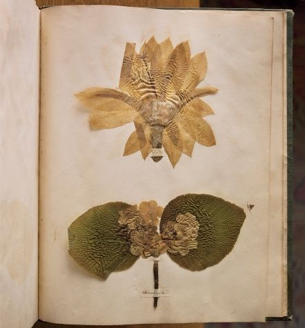 Emily Dickinsons pressed flowers- Annie Lebovitz (from her book pilgrimage)