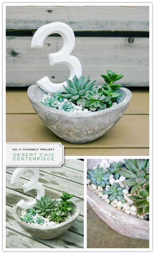 Succulent centerpiece using a bowl. Kinda groovy. Without the number