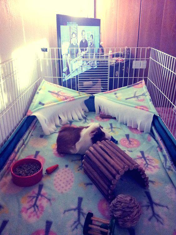 Dig box ideas needed - Hedgehog Central – Hedgehog pet care & owner forum