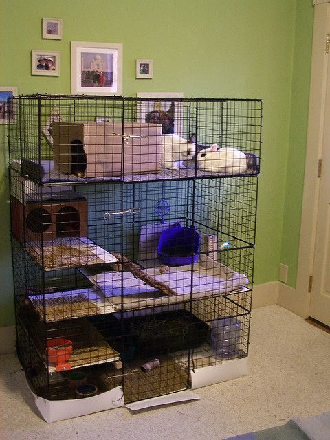I am starting this for Winnie.. use organizer cubes as walls for a rabbit habitat. Hold walls together and carpet/grass to the floor with zip ties. Use a shower liner around the bottom to protect flooring.