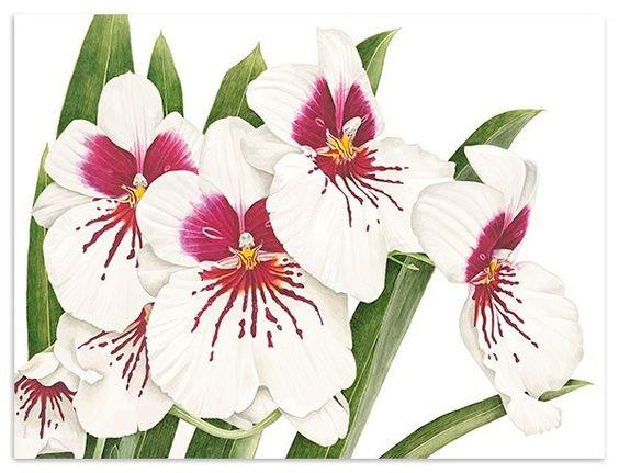 Анна Knights - современный ботанический картины - ботанического искусства - оригинальные акварели - цветочные картины - плод картины - растительные картины - ограниченный тираж жикле принты - поздравительные открытки