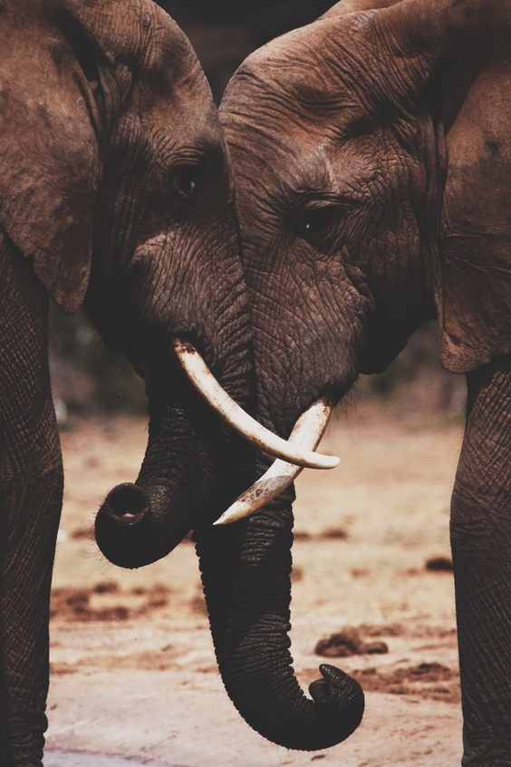 My favourite, they're so beautiful, intelligent and majestic animals - I will go and look after them one day