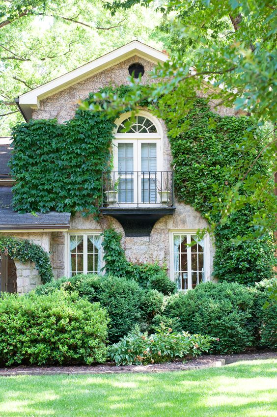 I will have ivy growing on the side of my house. I will. :)