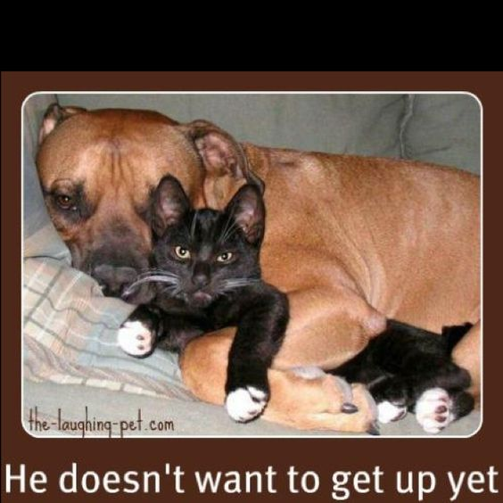 Hahahhahhh: Dogs And Cats, Adorable Animals, Pitbull, Funny Stuff, Animal Friends, Cats And Dogs, Cats Dogs, Furry Friends