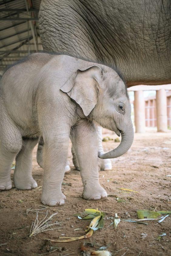 film thailand youtube elephant