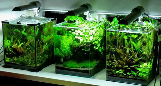 planted nano tank - Google Search