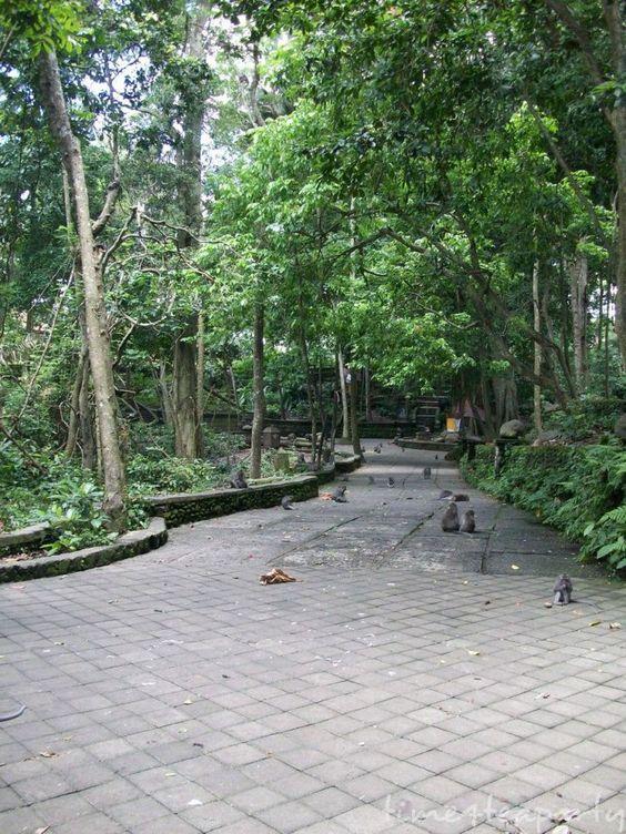 Monkey Forest 10: