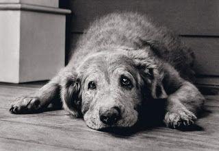 """""""BLOG DO QUINTAL"""":: Alimentação para cães idosos"""