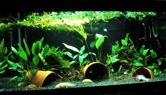 pretty planted aquarium