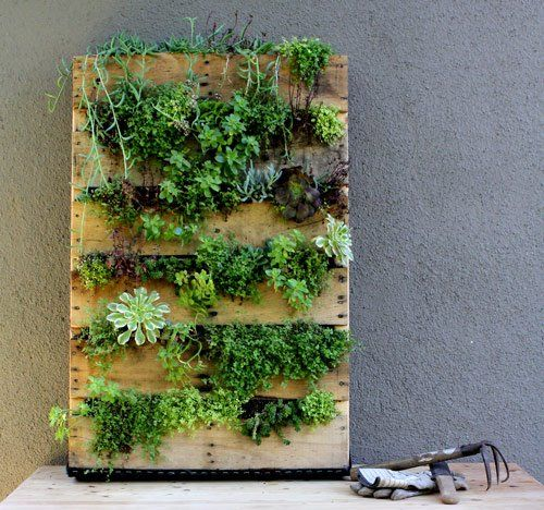 """You will need a pallet ( about 25""""x380)landscapingpaper,sandpaper, staple gun and staples, potting soil, assorted succulentsHeres the way to do it.Sand down any rough spots on your pallet.Double or triple up your landscaping fabric and begin the stapling fun. Staple fabric along the back, bottom and sides of the pallet, taking care at the corners to fold in the fabric so no soil will spill out. Leave the top unstapled with fabric, pour in your soil and plant your succulents in the cracks"""