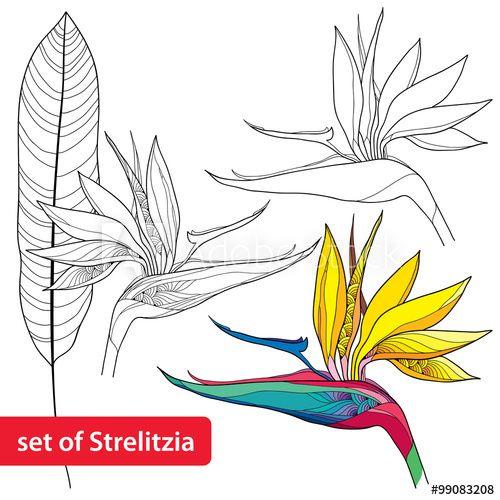 Set Of Strelitzia Reginae Or Bird Of Paradise Flower And Leaf Isolated On White Background Birds Of Paradise Flower Acrylic Painting Flowers Flower Painting