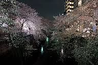 cherry blossom lounge - Google Search