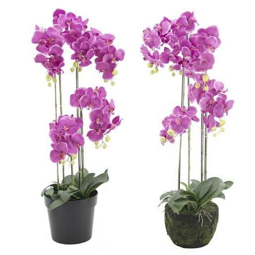 Apportez Une Jolie Note Printaniere A Votre Salon Ou Votre Jardin En Choisissant Ces Orchidees Geantes En Pot Entre Douc En 2020 Orchidee Deco Exterieure Rose Fuchsia