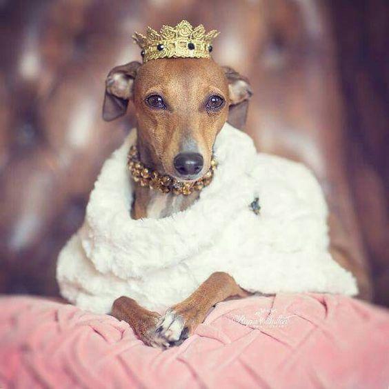 Her majesty - Princess Iggie