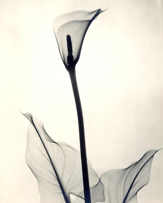 Photographies aux Rayons des Années 1930 de Détails délicats de Fleurs (3)