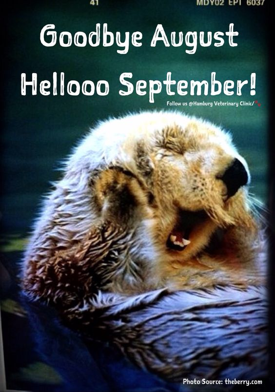 Beautiful, New month and The birds on Pinterest