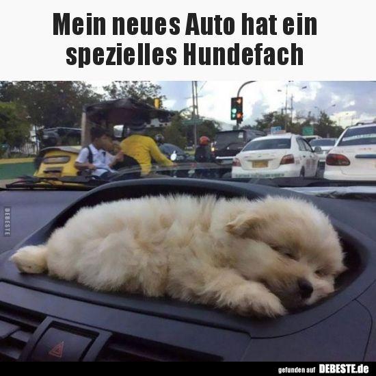 Mein Neues Auto Hat Ein Spezielles Hundefach Hunde Witzige