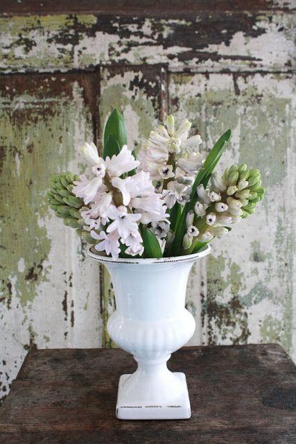 Bouquet de jacinthe