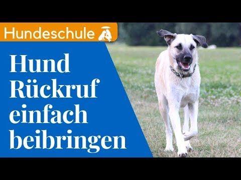 Hund Ruckruf Beibringen So Rufst Du Garantiert Jeden Hund Perfekt Ab Ruckruftraining Hund Youtube Hunde Hundeerziehung Training