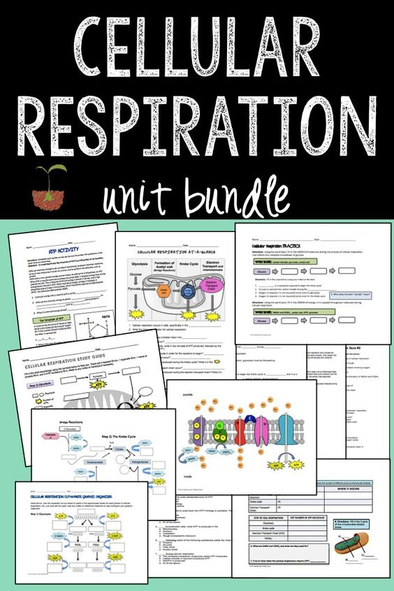 """By far my best TPT purchase yet! As a 1st year teacher I was secretly worried about teaching Respiration to my 9th grade bio class. I was initially interested in the graphic organizers but I'm so glad I decided to purchase the entire bundle! So grateful that you included editable word formats too- they were extremely helpful as I created my own versions of the test/study guide! Thank you so much for being so generous! Teachers Pay Teachers"" -- Emily P 12/19/2015:"