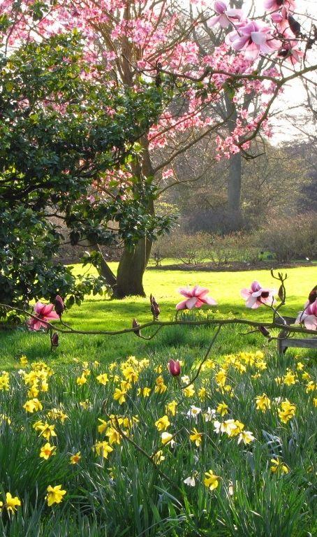 Magnolia Trees and Daffodils