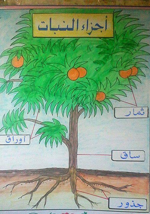افكار وسائل تعليمية لمادة العلوم ابتدائي مجسمات للعلوم بالعربي نتعلم Preschool Crafts Sewing Projects For Kids Crafts