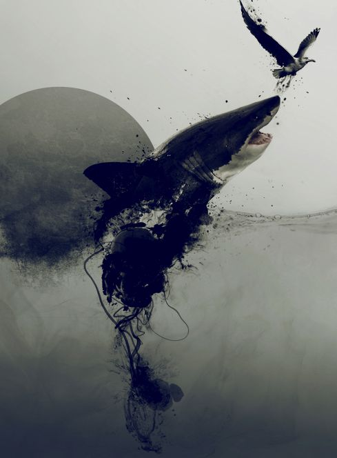 Tiburón tintorera.