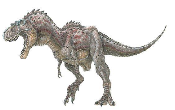 Gorgosaurus libratus aka Albertasaurs libratus - a tyrannosaur dinosaur from the late cretaceous