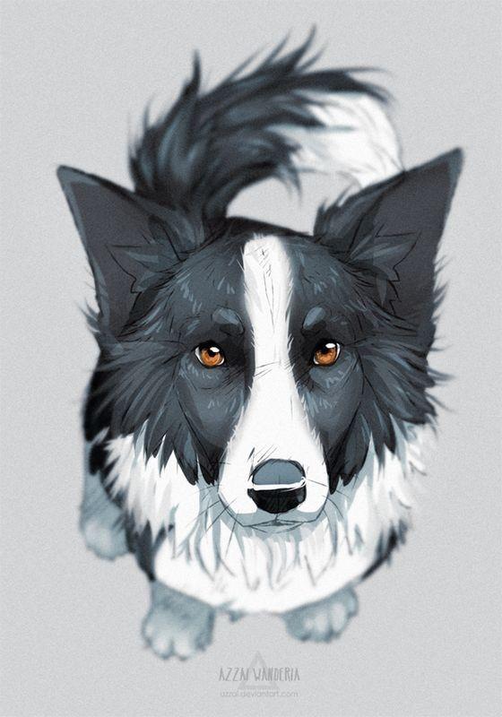 Grenze Collies Sind Gorgeous Hund Illustration Hundezeichnung Hund Zeichnen