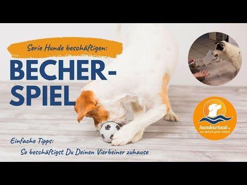 Hunde Beschaftigen Optimale Hundebeschaftigung Zu Hause Youtube In 2020 Hund Beschaftigen Hunde Malteserwelpen