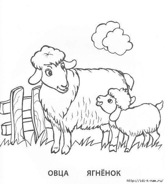 раскраски для детей домашние животные птицы детеныши овца ...