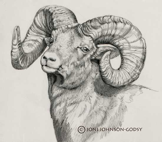 ram - love the horns for an illustration i'm working on ...