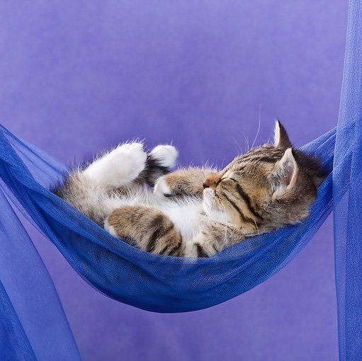 Silver Gin211005 Twitter Cute Cats Cats Cute Animals