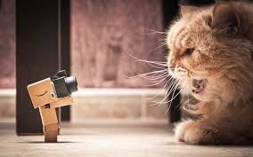 Image result for danbo