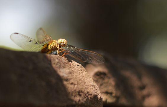 Thailändische fotogene Insekten...