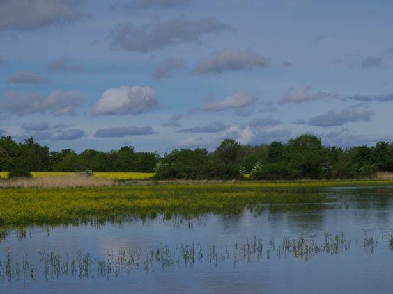 L'étang Quinson, un des 1000 étangs de la Dombes