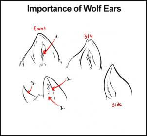 How to draw wolf ears - photo#6