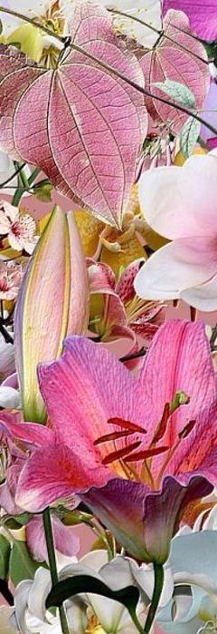 "Some-kinda Flowers (whatcha macallum) ~ Miks' Pics ""Flowers lll"" board @ http://www.pinterest.com/msmgish/flowers-lll/"