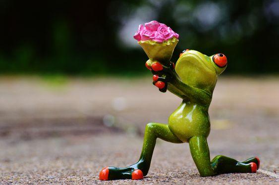 rana, flores, amor, perdon, regalo, rosas, dulce, de rodillas - Fondos de Pantalla HD - professor-falken.com