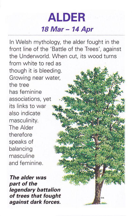 Sacred celtic trees Alder: