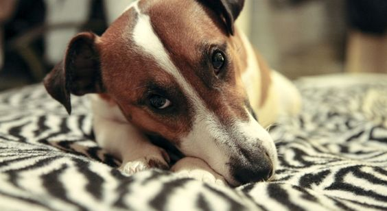 Taming the Anxiety Monster | Dublin Dog
