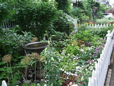 Front yards buffalo and yards on pinterest for Grassless garden designs