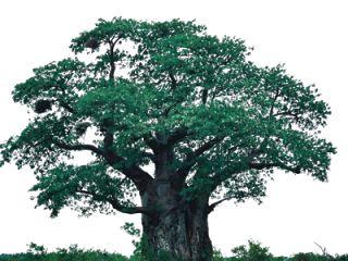 W Arte Pop: PNG's de Árvores em HD
