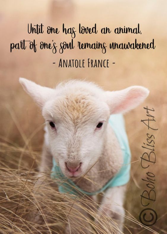 Anatole French Quote Until One Has Loved An Animal A Part Of Etsy Sheep Art Cute Animal Quotes Animal Quotes