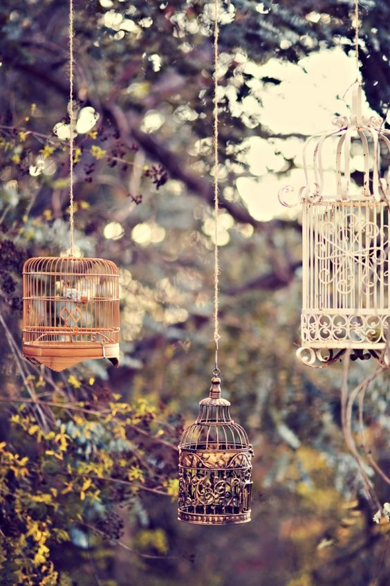 Old bird cages hanging from tree: