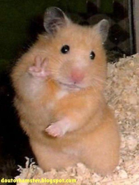 Pin On Hamster Feliz