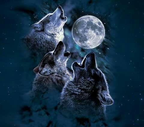 Rodrigo Junior Batista Adli Kullanicinin Wolfes Panosundaki Pin Alaska Kurdu Vahsi Hayvanlar Dijital Boyama