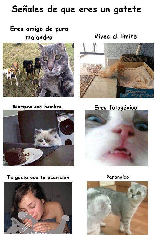 Cuantocabronmemes No Sabia Que Era Un Gato Cuantocabronmemes Sabia Memes Humor Cat Pose