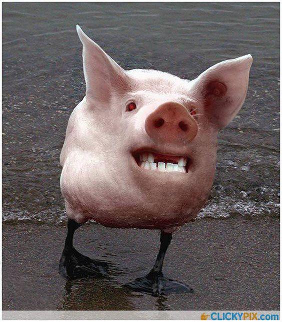 Freaky Photoshopped Animal Hybrids   Cool Photography ...