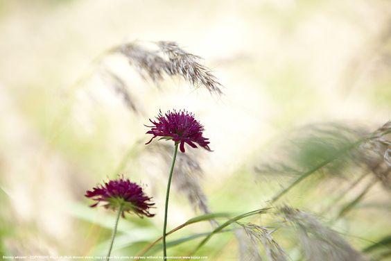 """500px / Photo """"Stormy wheater"""" by kujaja jaja"""
